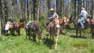 Badger Drop Camp - What better way to explore this incredible landscape than have all your heavy camping equipment and food packed in on mules to a drop camp deep inside the Badger. Four to five day trip for a maximum of 8 people! Courtesy of Frank Vitale. Dates flexible. -