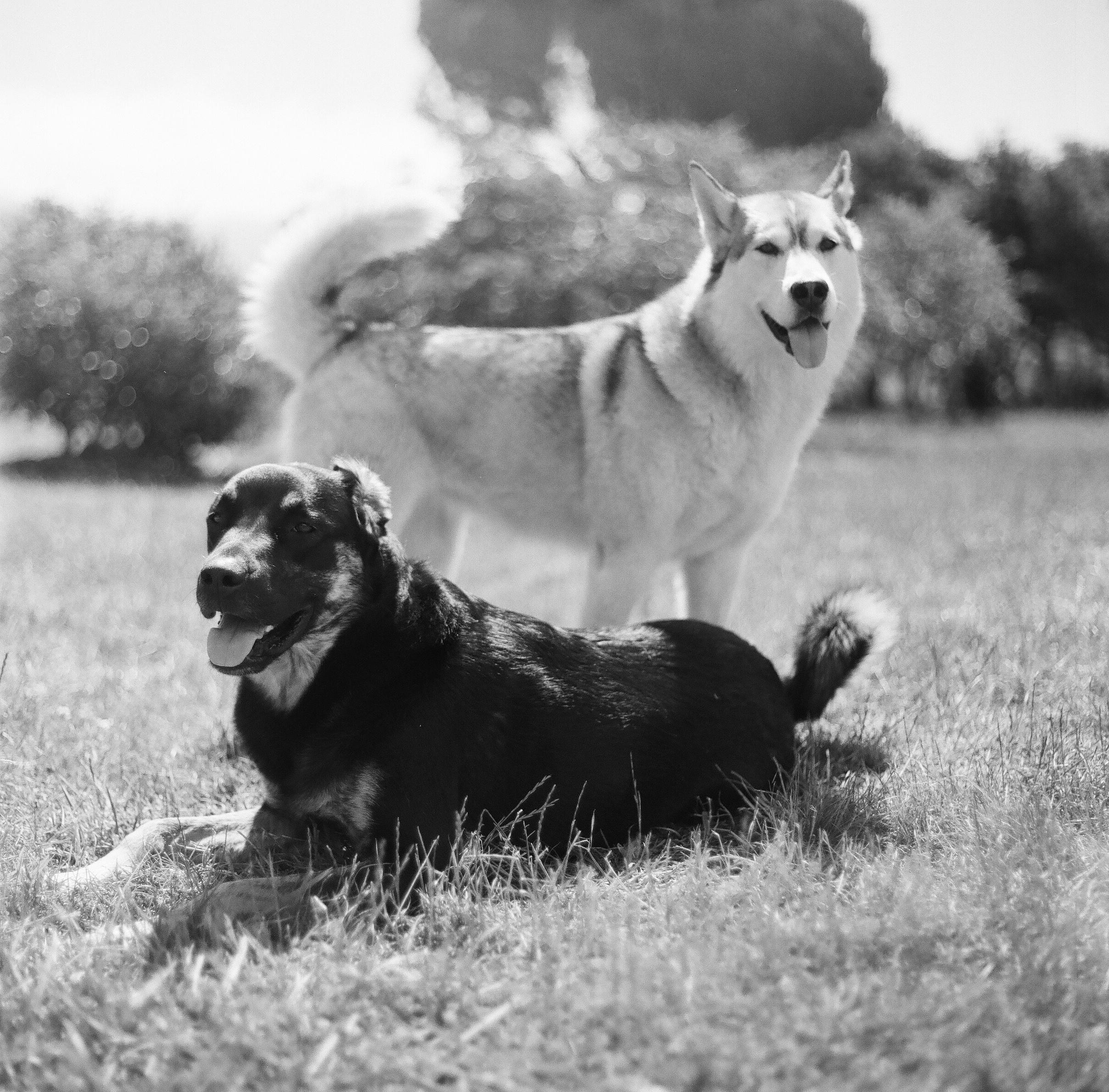 Bolinas Dogs Lynn Bagley