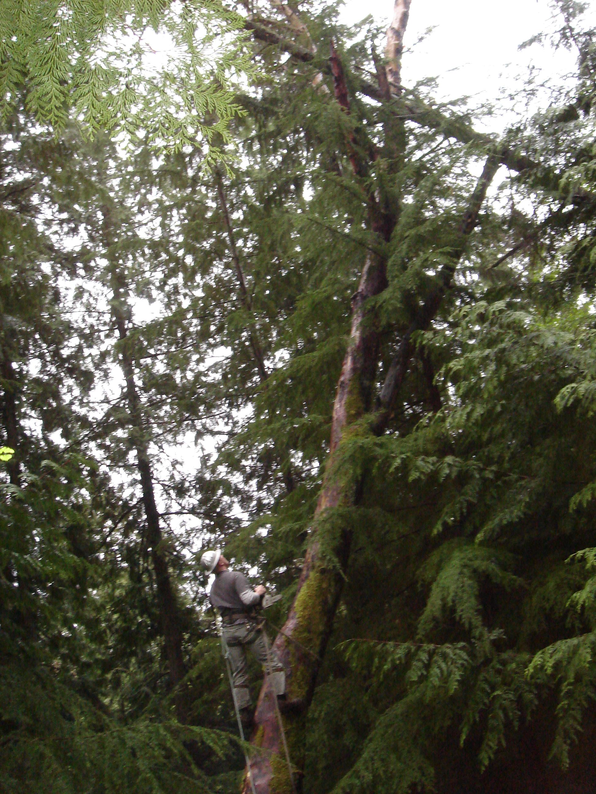 tree climb 2.JPG