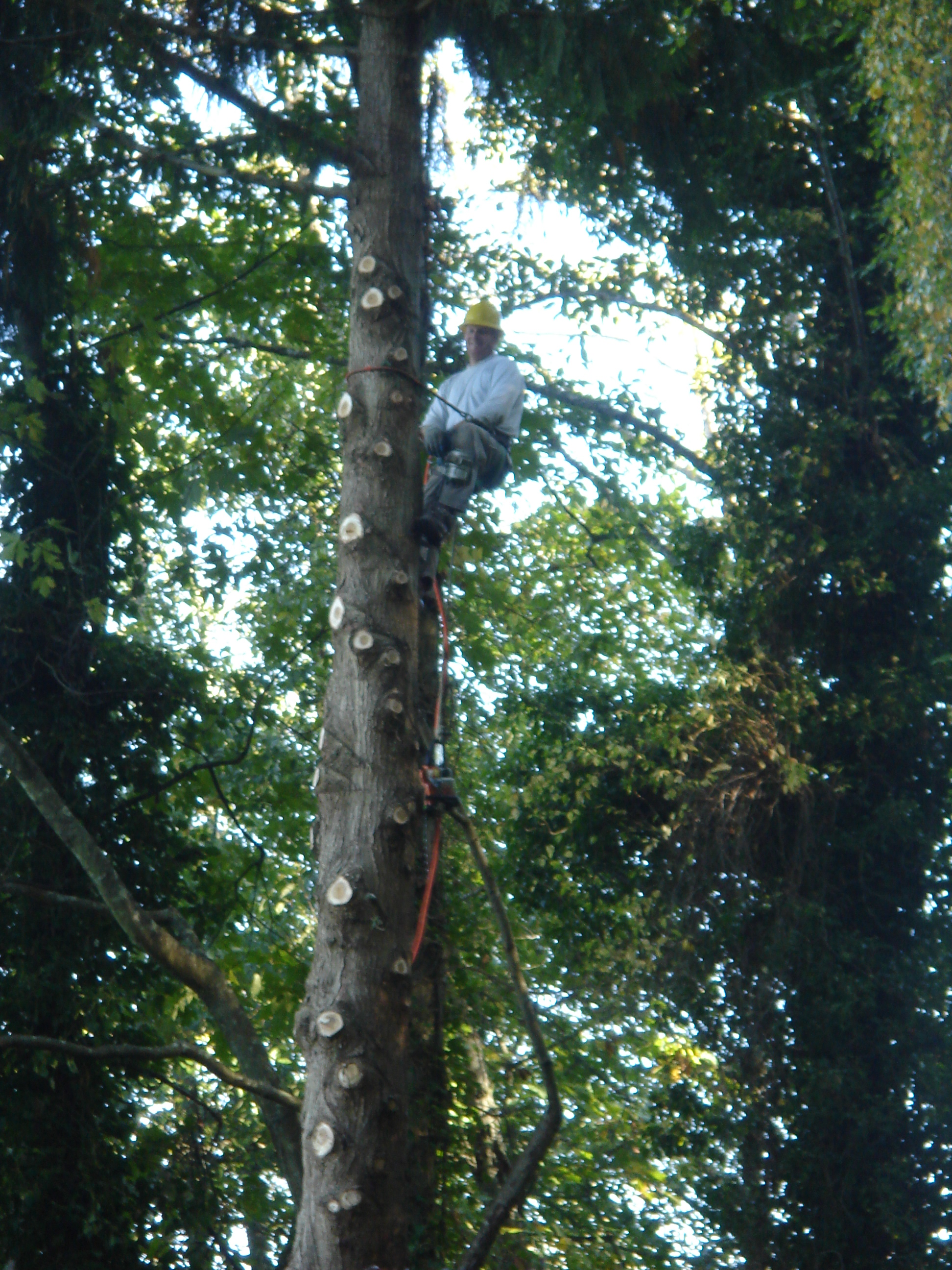 tree climb.JPG