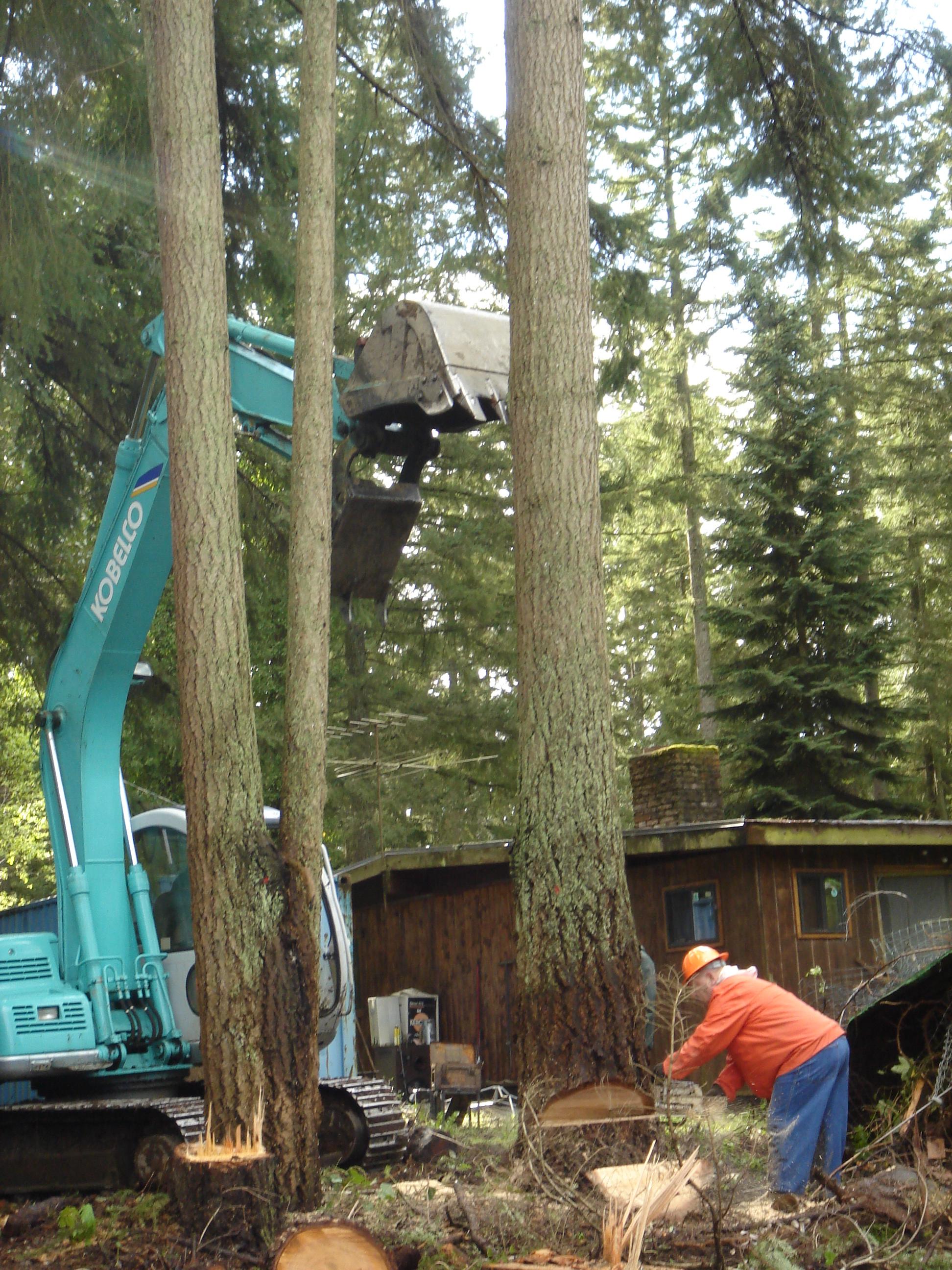 tree cut down 1.JPG