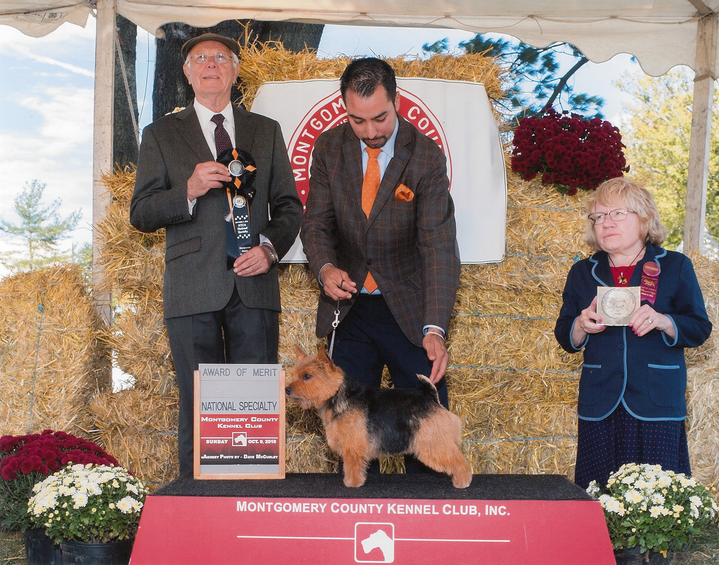 Award of Merit at 15 months old under judge Peter Green at the NTCA National Specialty, October 9, 2016. Handled by Alfonso Escobedo.