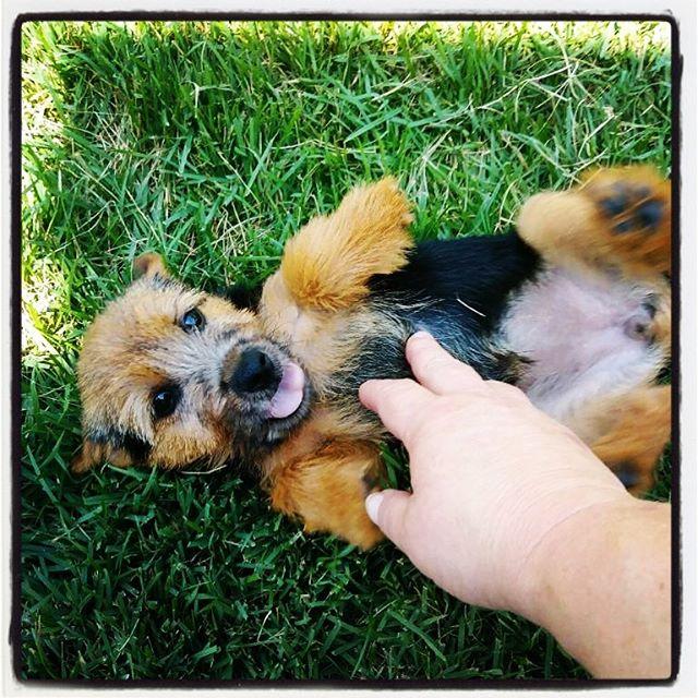 This little dickens! Puppy love Winnie (Skip x Bitsy).