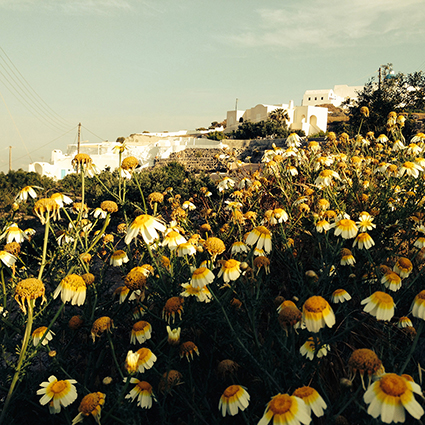 Happiness radiates like the fragrance form a flower and draws all good things toward you. - Maharishi Mahesh Yogi