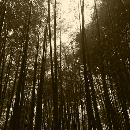 """Shinrin-yoku is a Japanese term for Forest Bathing, that means """"taking in the forest atmosphere"""".  The idea is to visit areas of nature and be there and walk in a relaxed way and allow for the many calming and rejuvenating benefits to occur.  Here are some of the scinetifcally proven benefits: Boosted immune system functioning, reduced blood pressure, reduced stress. improved mood. increased ability to focus, even in children with ADHD, accelerated recovery from surgery or illness, increased energy level and improved sleep.  For more informaition about Skinrin-yoku got to http://www.shinrin-yoku.org"""
