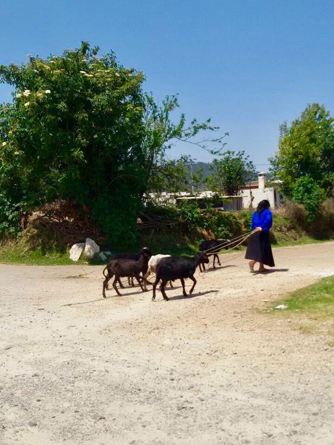 We saw many village women taking goats to pasture. Below, women in goat hide skirts with long fibre.
