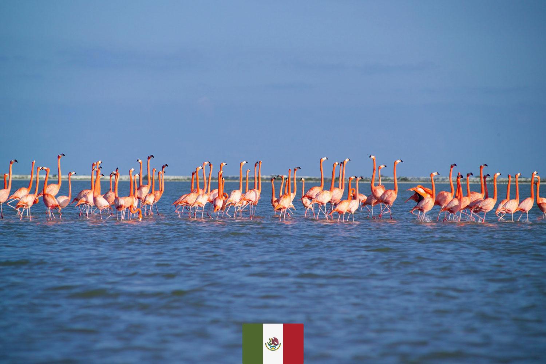 Hammocks_and_Ruins_Blog_Riviera_Maya_Mexico_Travel_Discover_Explore_Yucatan_Rio_Lagartos__Day_Trip_Winged_Angles_Cover_2.jpg