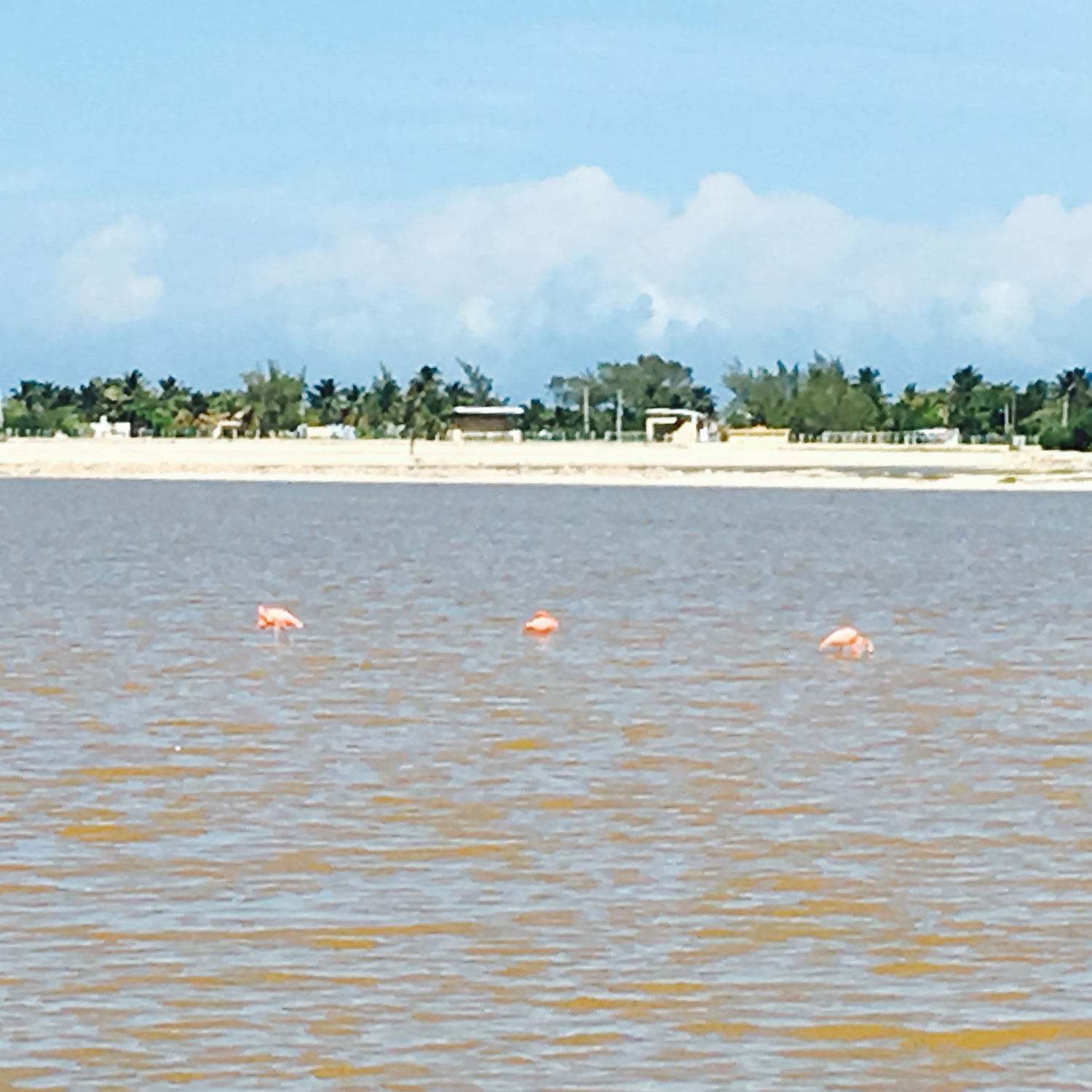 Pink flamingos can be seen in the adjacent lakes. You can walk around them.