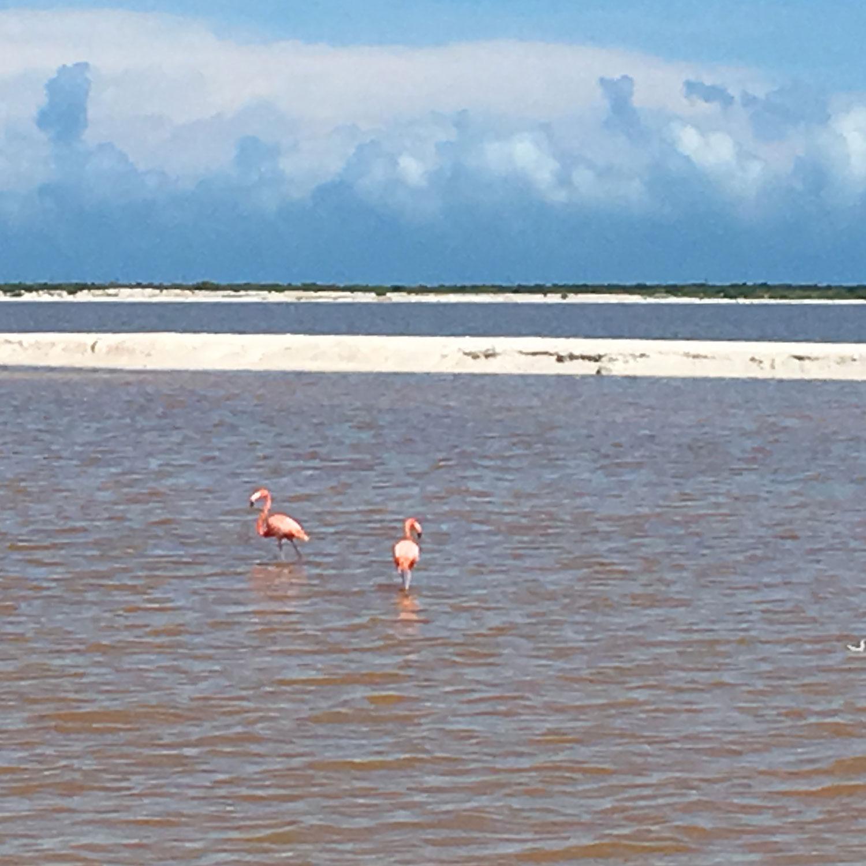 Hammocks_and_Ruins_Blog_Riviera_Maya_Mexico_Travel_Discover_Explore_Yucatan_Lakes_Rivers_Pink_Lagoon_10.jpg