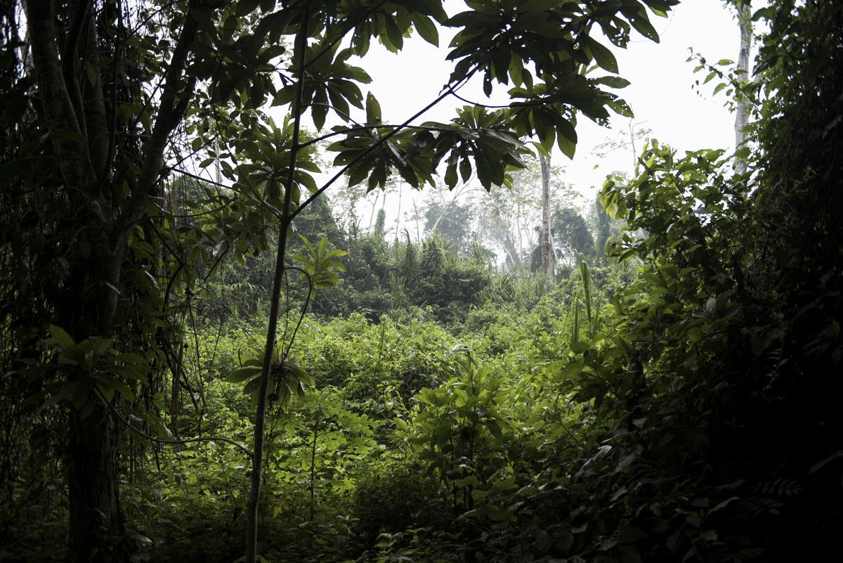Blue mountinas jungle.jpg