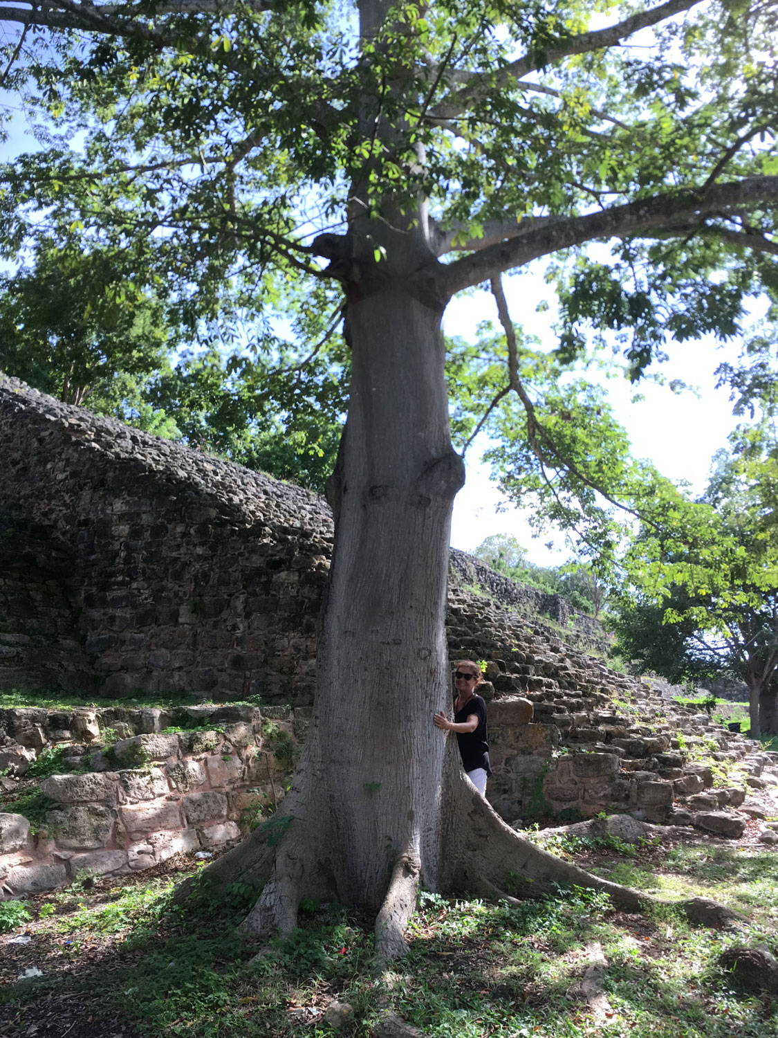 Embracing the tree by the K'inich pyramid for health and energy.