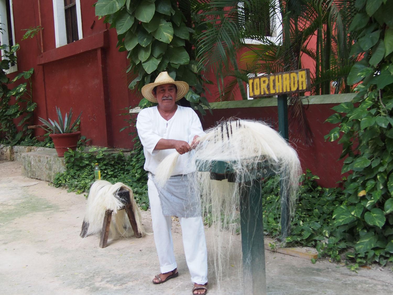 Don Alfredo combing the fibre.