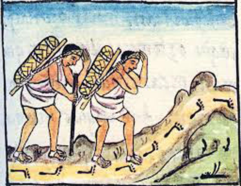 Pochteca merchants carrying cocoa. Source:  wordpress.com   .