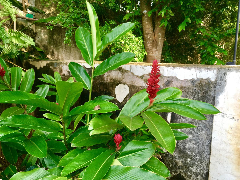 Hammocks_and_Ruins_Riviera_Maya_Mexico_Explore_What_to_Do_Yucatan_Hammocks_Haciendas_Yaxcopoil_9.jpg