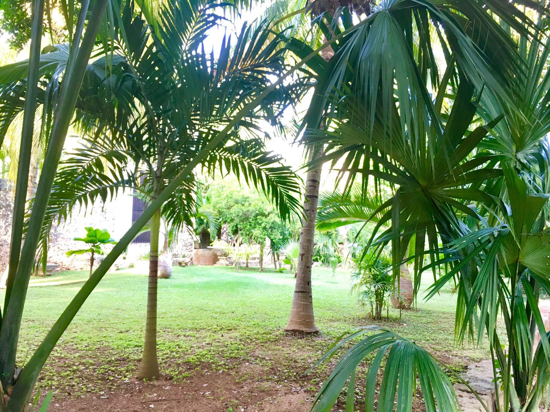 Hammocks_and_Ruins_Riviera_Maya_Mexico_Explore_What_to_Do_Yucatan_Hammocks_Haciendas_Yaxcopoil_12.jpg