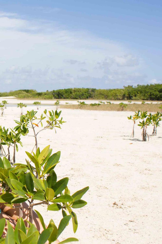 Hammocks_and_Ruins_Things_To_Do_Cancun_Explore_Riviera_Maya_Mexico_Cancun_Beaches_Windsurfing_Kite_Surfing_Playa_Isla_Blanca_11.jpg