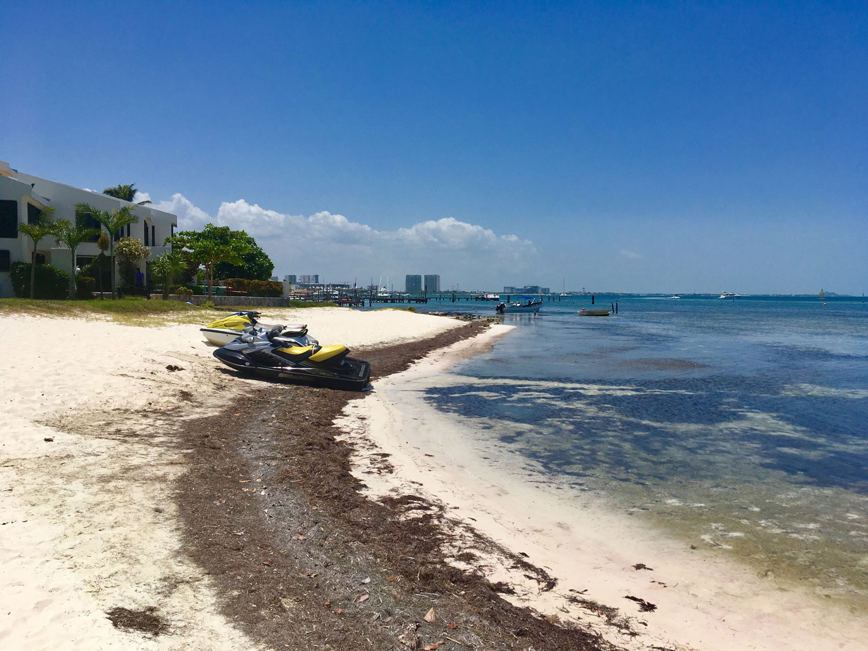 Seaweed in the next bay, in front of Playa Linda condos.