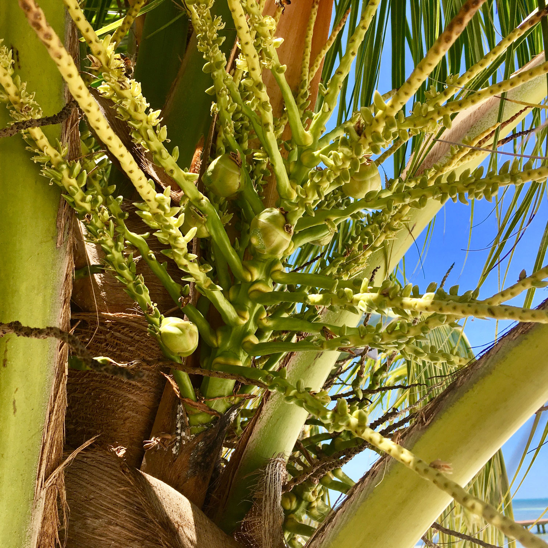Hammocks_and_Ruins_Blog_Riviera_Maya_Mexico_Travel_Discover_Explore_Yucatan_Hammocks_Beaches_Near_Cancun_Playa_Linda_22.jpg