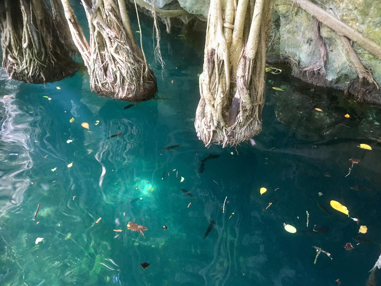 Hammocks_and_Ruins_Riviera_Maya_What_to_Do_Puerto_Morelos_Cenotes_Verdo_Lucero_45.jpg