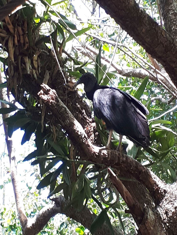 Hammocks_and_Ruins_Riviera_Maya_What_to_Do_Puerto_Morelos_Cenotes_Verdo_Lucero_3.jpg