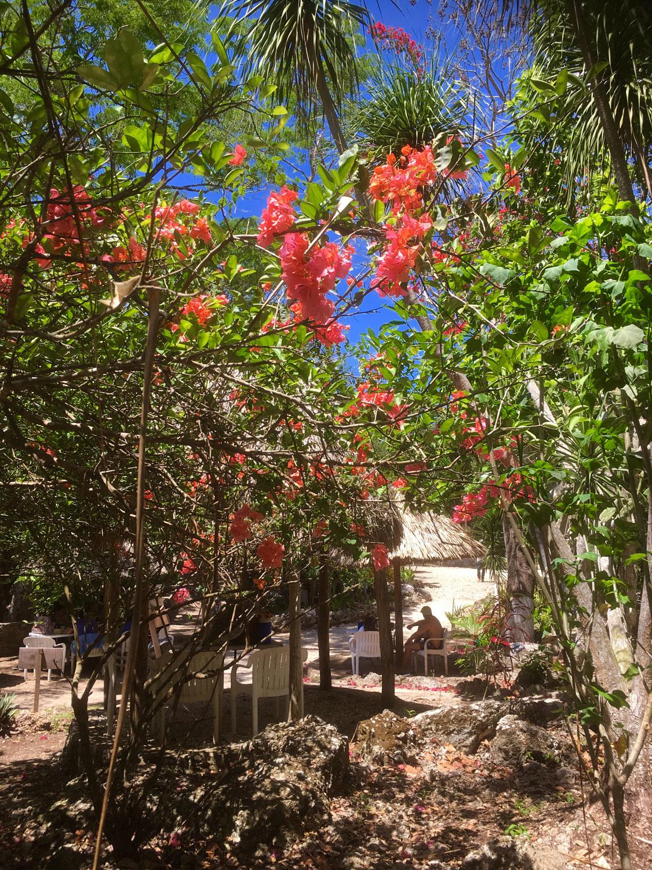 Hammocks_and_Ruins_Riviera_Maya_What_to_Do_Puerto_Morelos_Cenotes_Verdo_Lucero_38.jpg