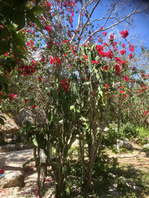 Hammocks_and_Ruins_Riviera_Maya_What_to_Do_Puerto_Morelos_Cenotes_Verdo_Lucero_39.jpg