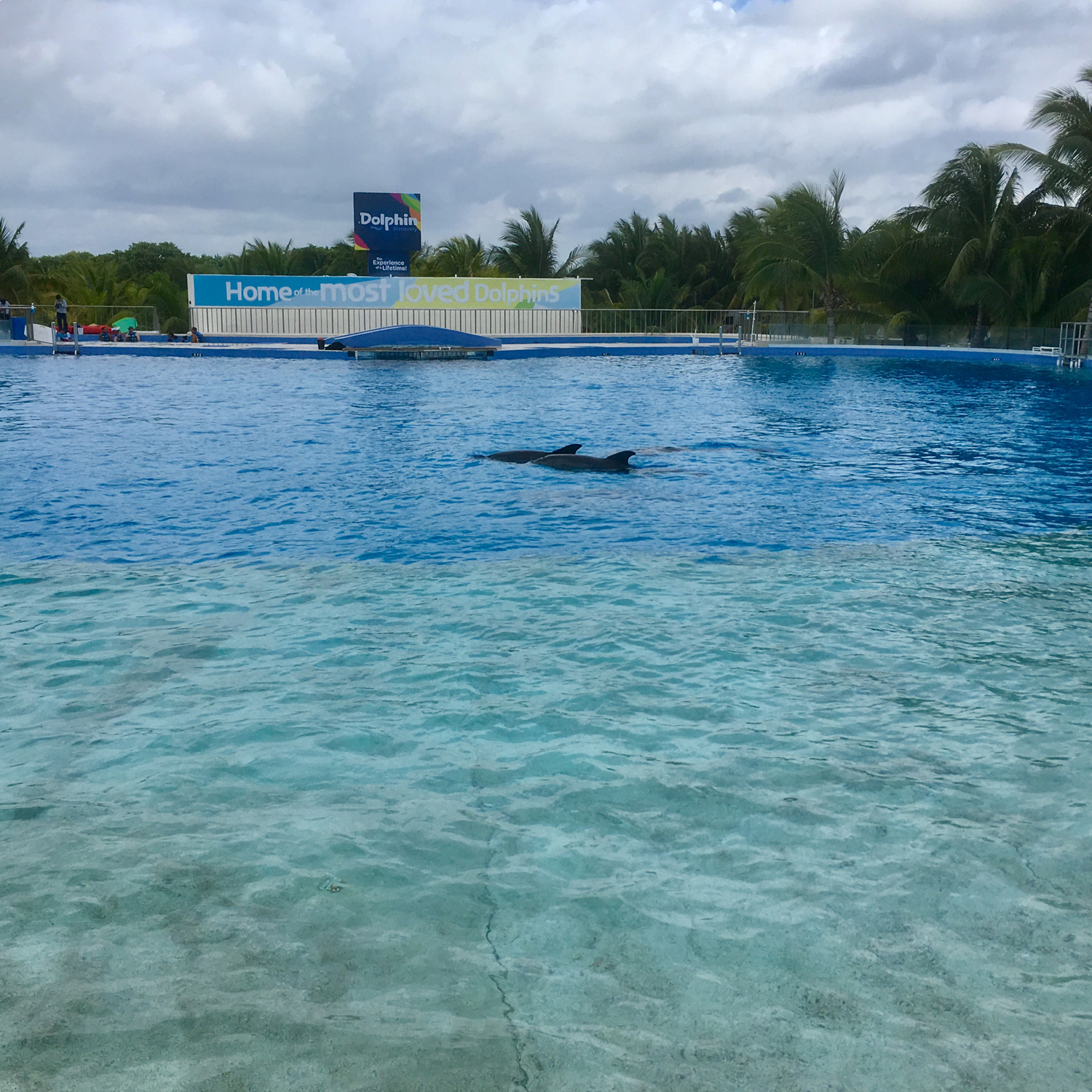 Swimming with dolphins (in the pool).