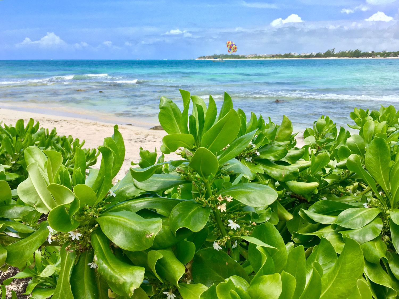 Hammocks_and_Ruins_Riviera_Maya_What_to_Do_Playa_Del_Carmen_Beaches_Punta_Esmeralda_15.jpg