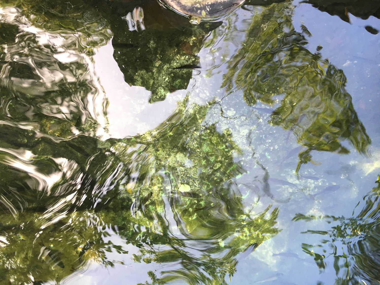 Hammocks_and_Ruins_Riviera_Maya_What_to_Do_Playa_Del_Carmen_Tulum_Cenotes_Cenote_Escondido_14.jpg