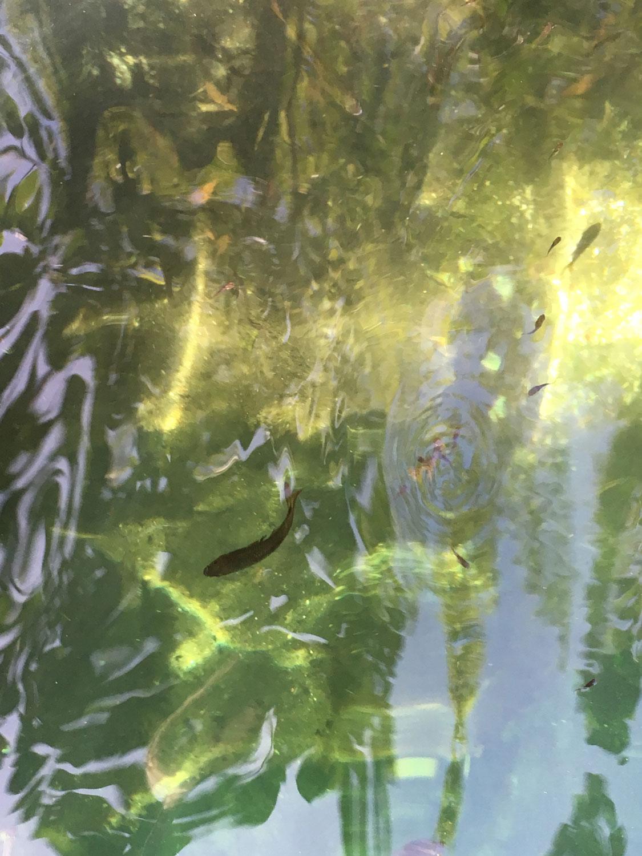 Hammocks_and_Ruins_Riviera_Maya_What_to_Do_Playa_Del_Carmen_Tulum_Cenotes_Cenote_Escondido_19.jpg