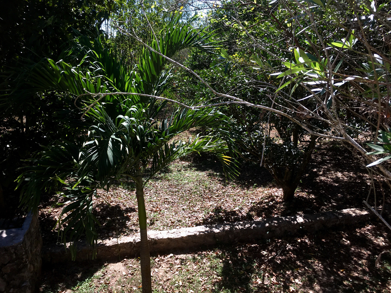 Hammocks_and_Ruins_Blog_Riviera_Maya_Mexico_Travel_Discover_Yucatan_What_to_do_Merida_Haciendas_Santo_Domingo_Hacienda_23.jpg