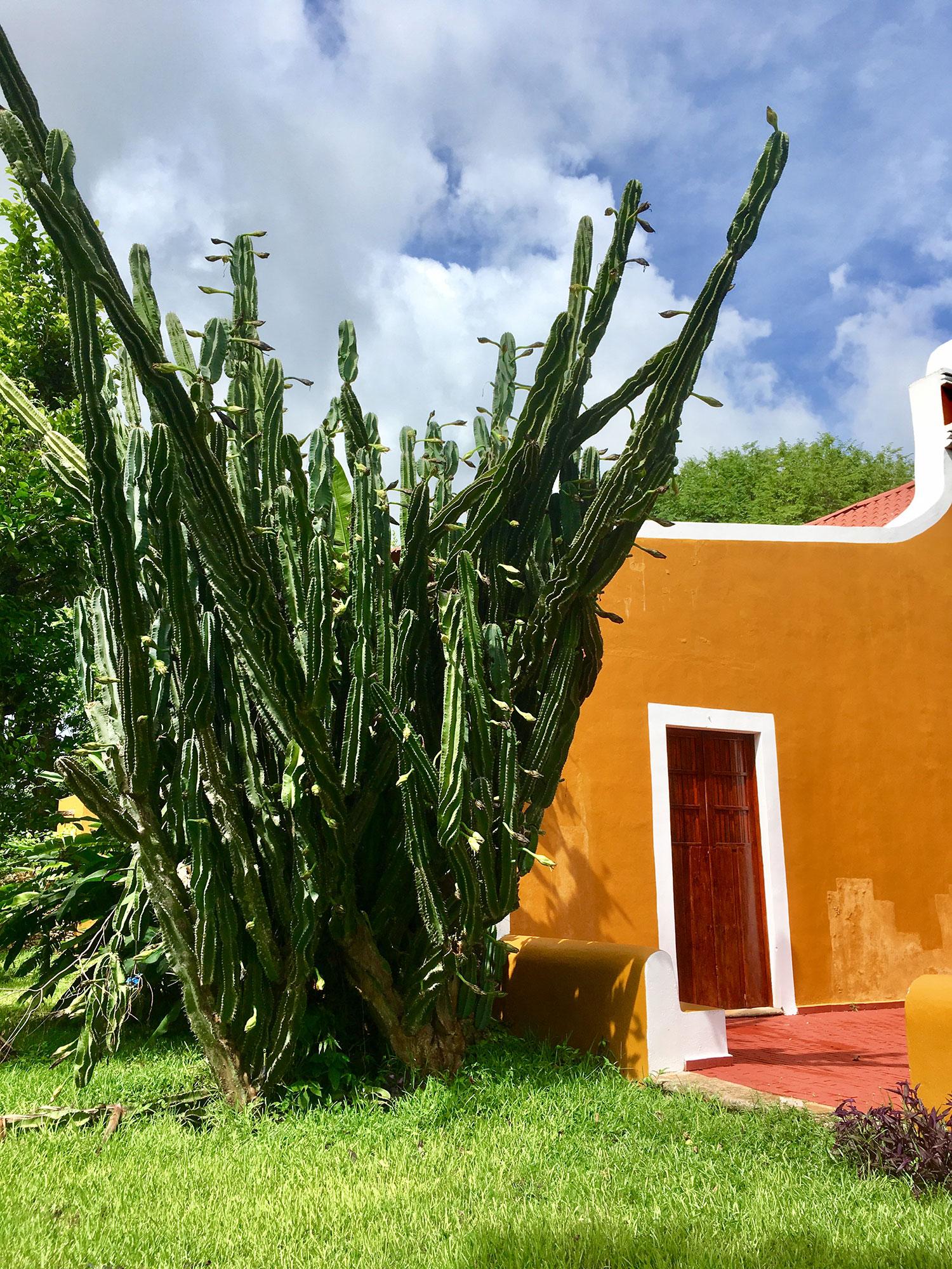 The hacienda gate with the volcano Popocatépetl behind.