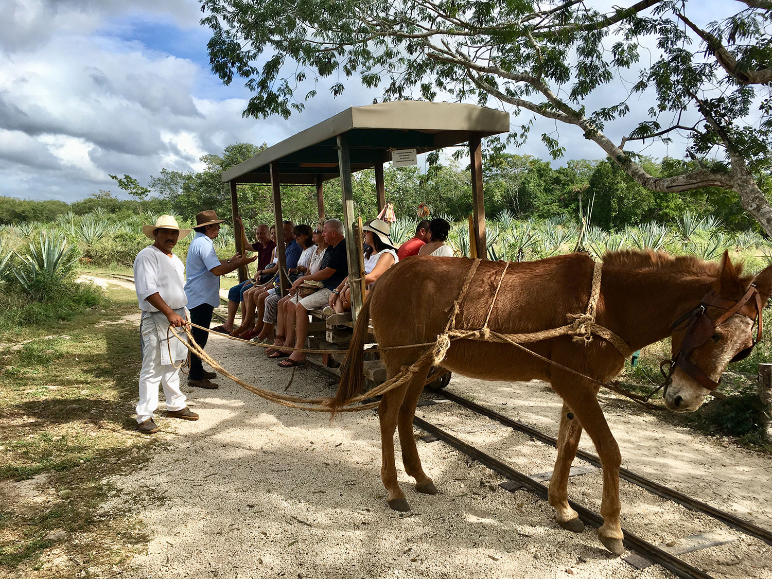 The wagon ride through the fields to the cenote.