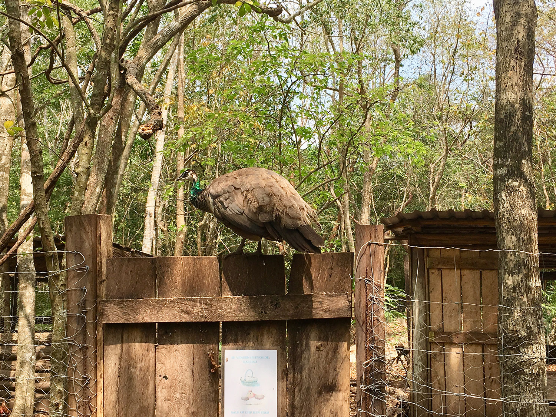 Hammocks_and_Ruins_What_to_Do_Mexico_Maya_cenote_7_bocas_45.jpg