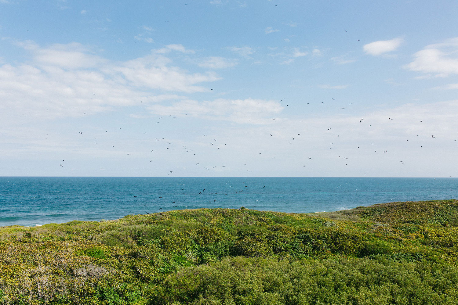 Spot the frigate birds.