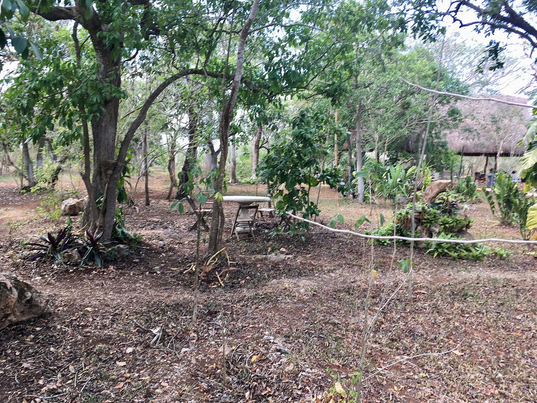 Hammocks_and_Ruins_What_to_Do_Mexico_Mayan_pyramids_cenote_Kikil_26.jpg