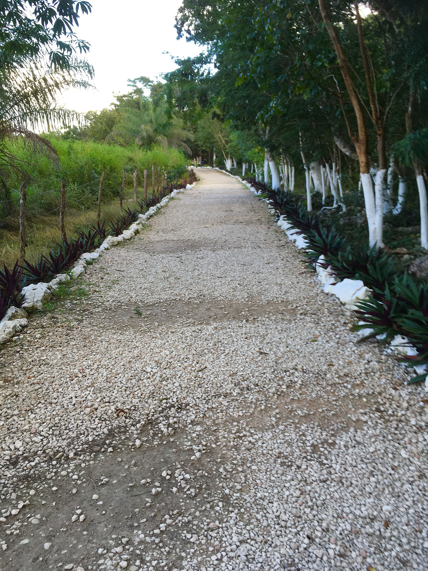 The path to the cave cenote.