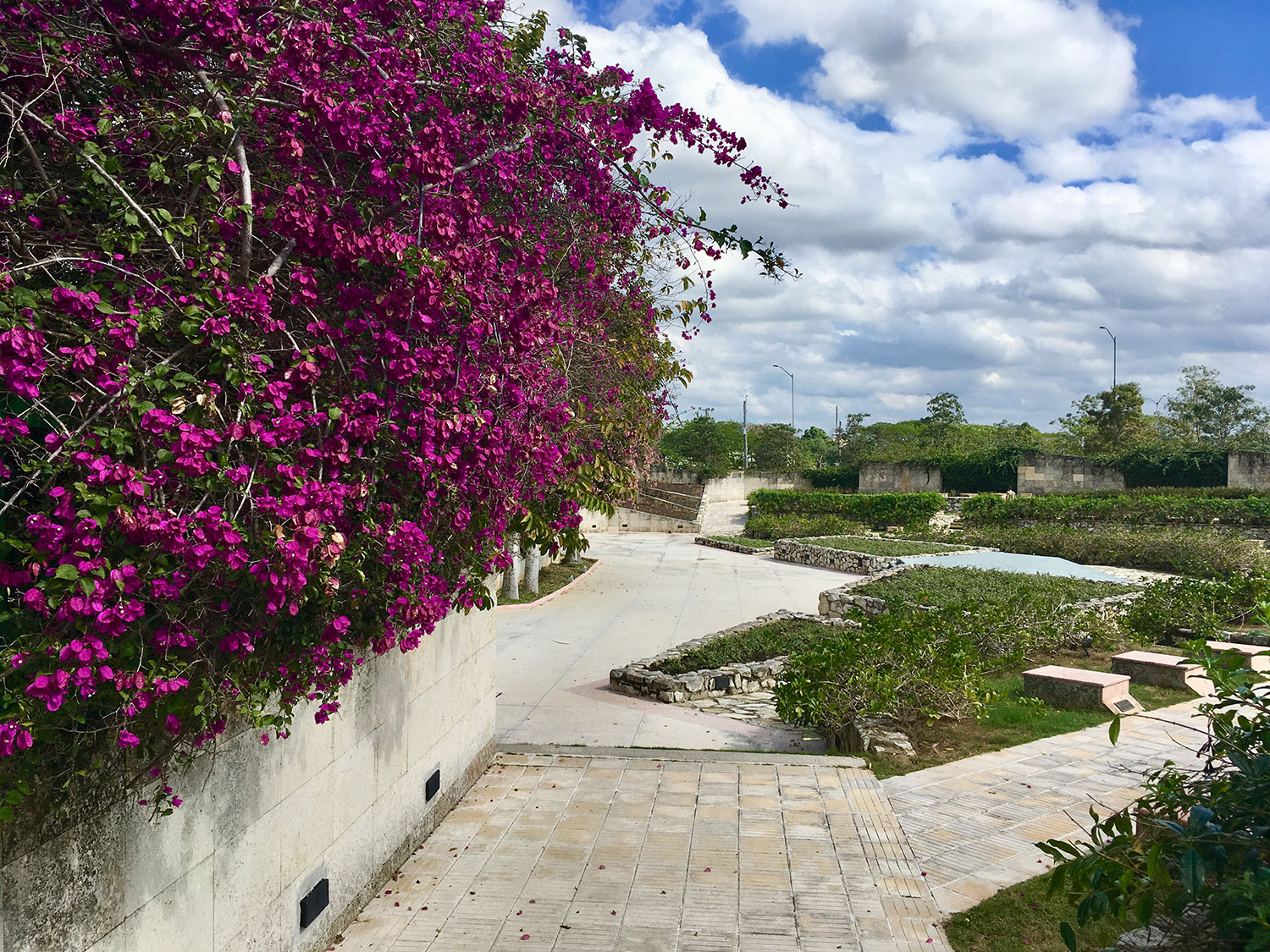 Bougainvillea at the cemetery of the revolutionaries.
