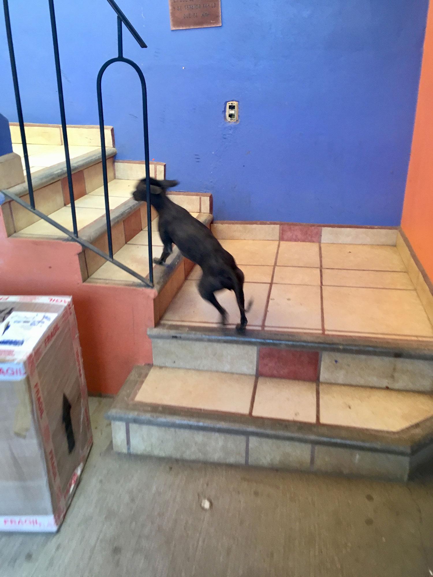 María's dog Dante.