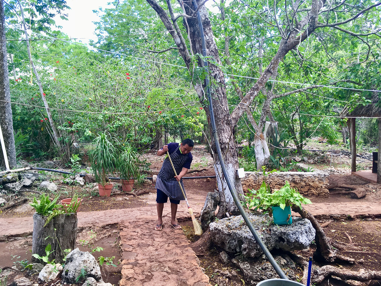 The staff clean the jungle garden all day long.