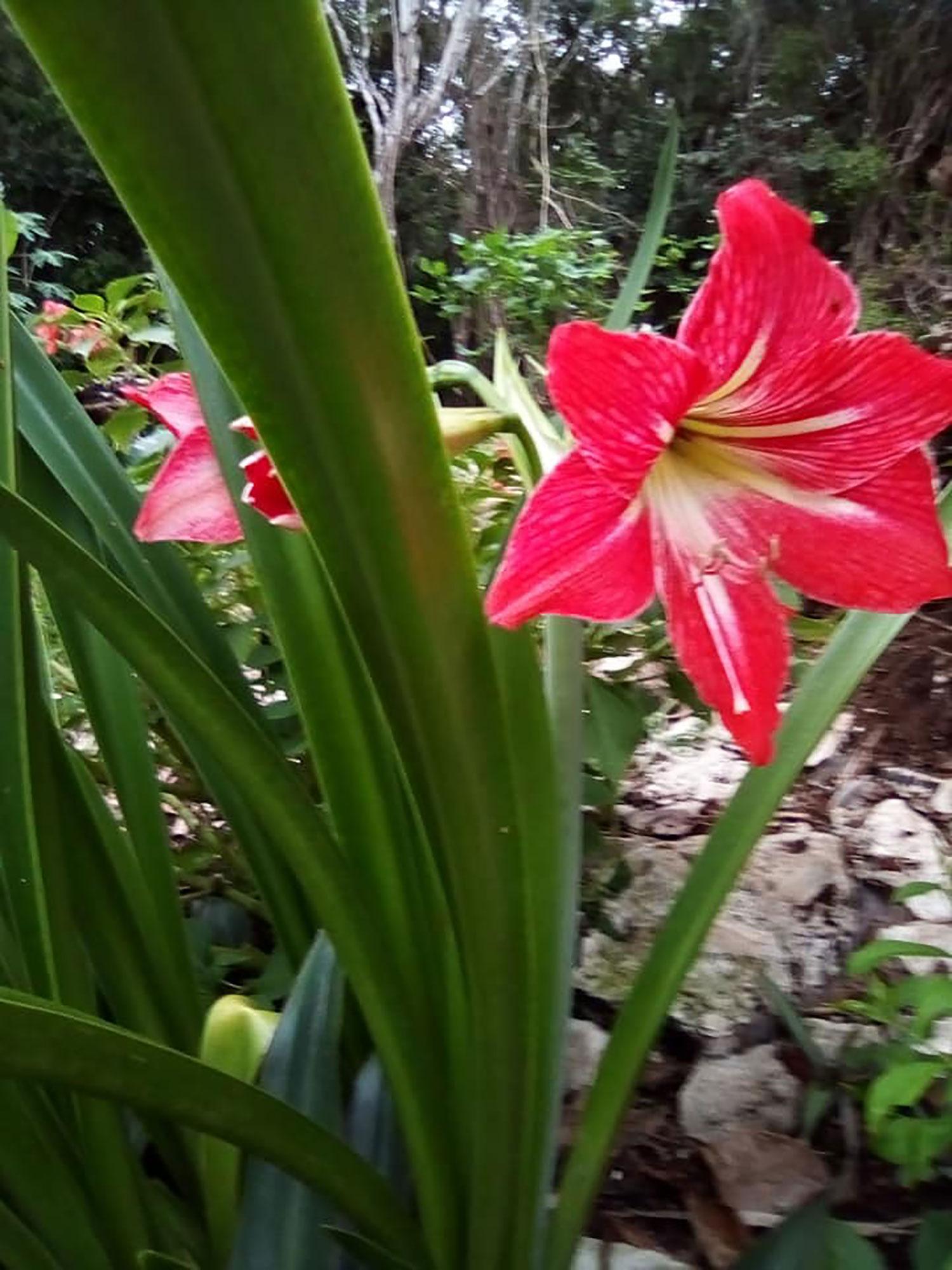 Hammocks_and_Ruins_What_to_Do_Yucatan_jungle_village_indigenous_Alde Maya_Ahau_Chooc_7.jpg