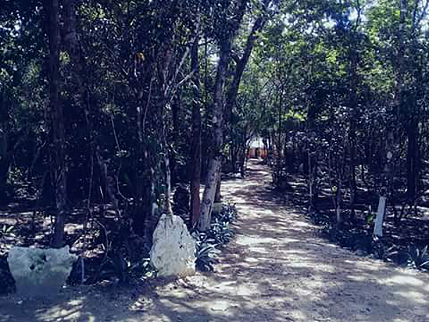 Then walk this path (for about 30m) to enter the village.