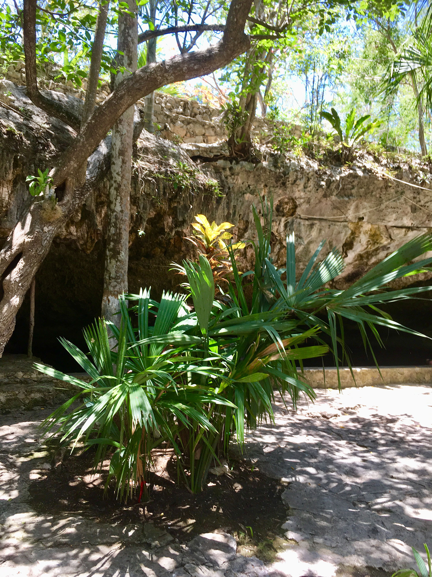 The cave of the cenote is semi-open.