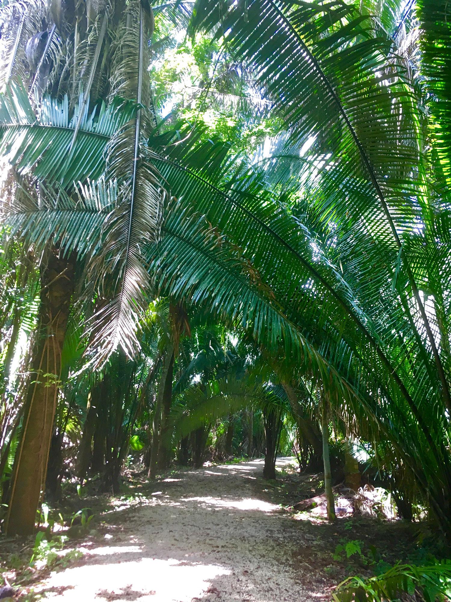 Hammocks_and_Ruins_What_to_Do_Yucatan_Mexico_pyramid_Maya_Kohunlich_47.jpg