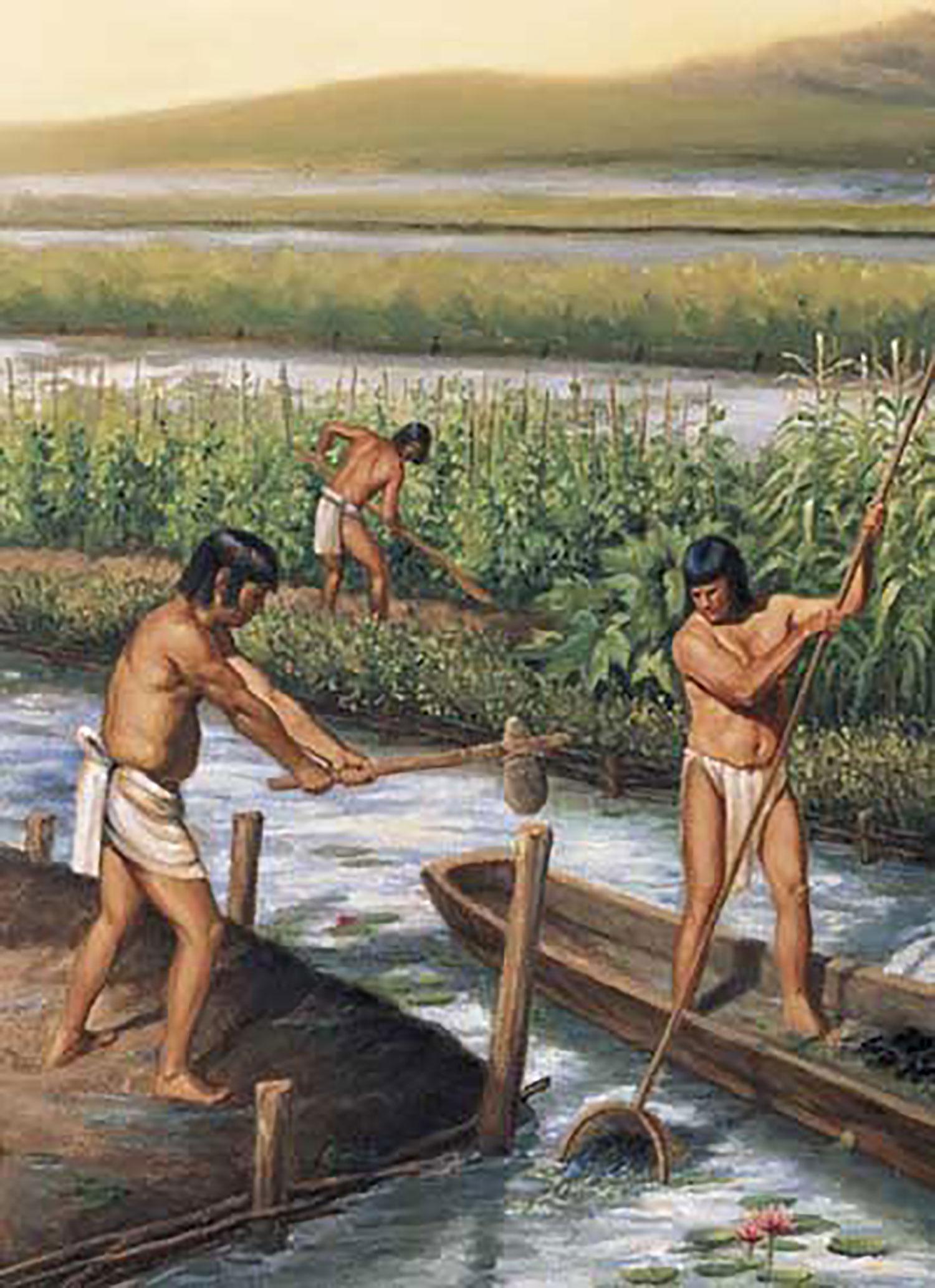 Maya raised fields:  centrallowlandmaya.weebly.com .