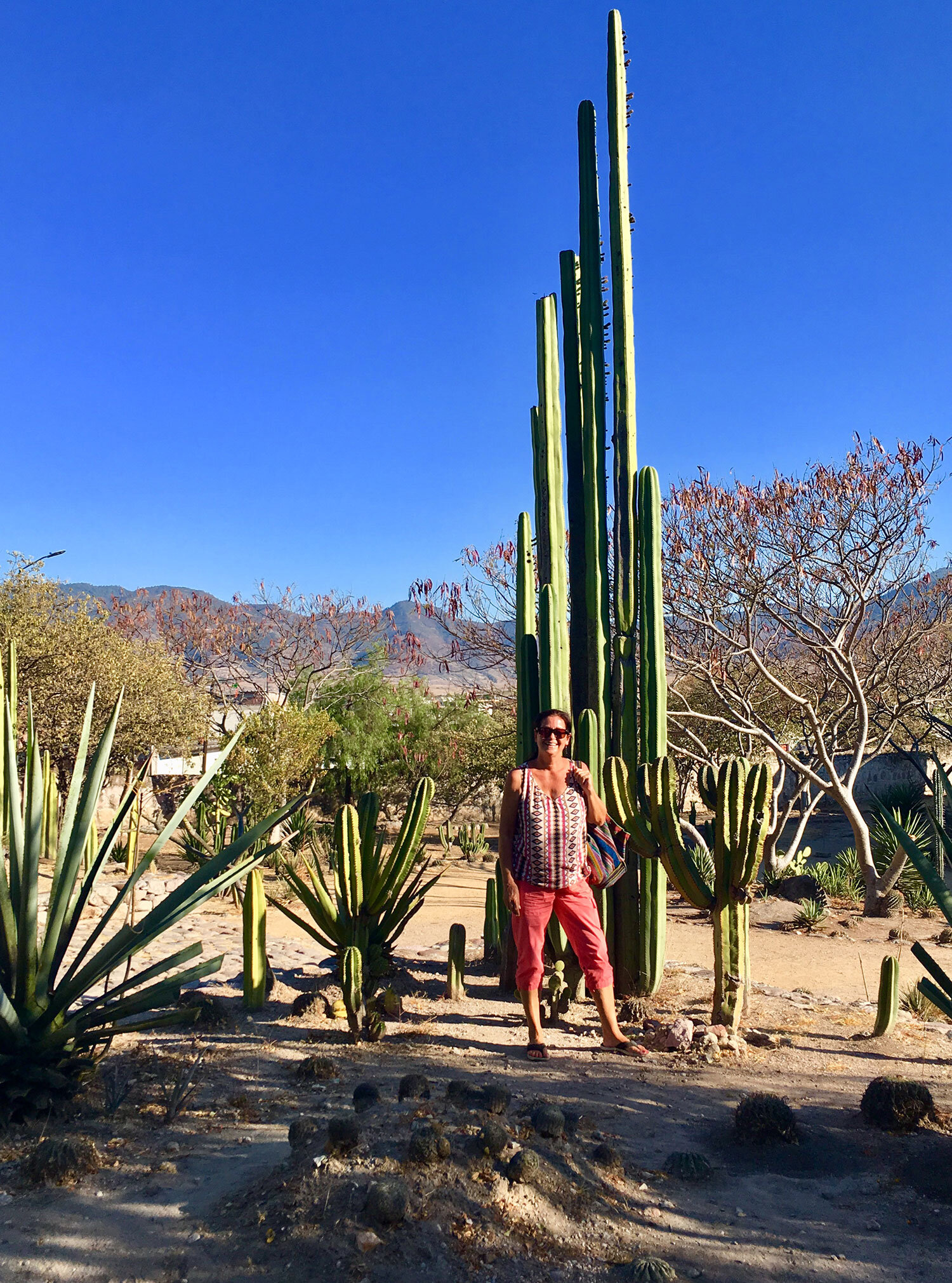 I am posing in the cactus garden of the Mitla ruins.