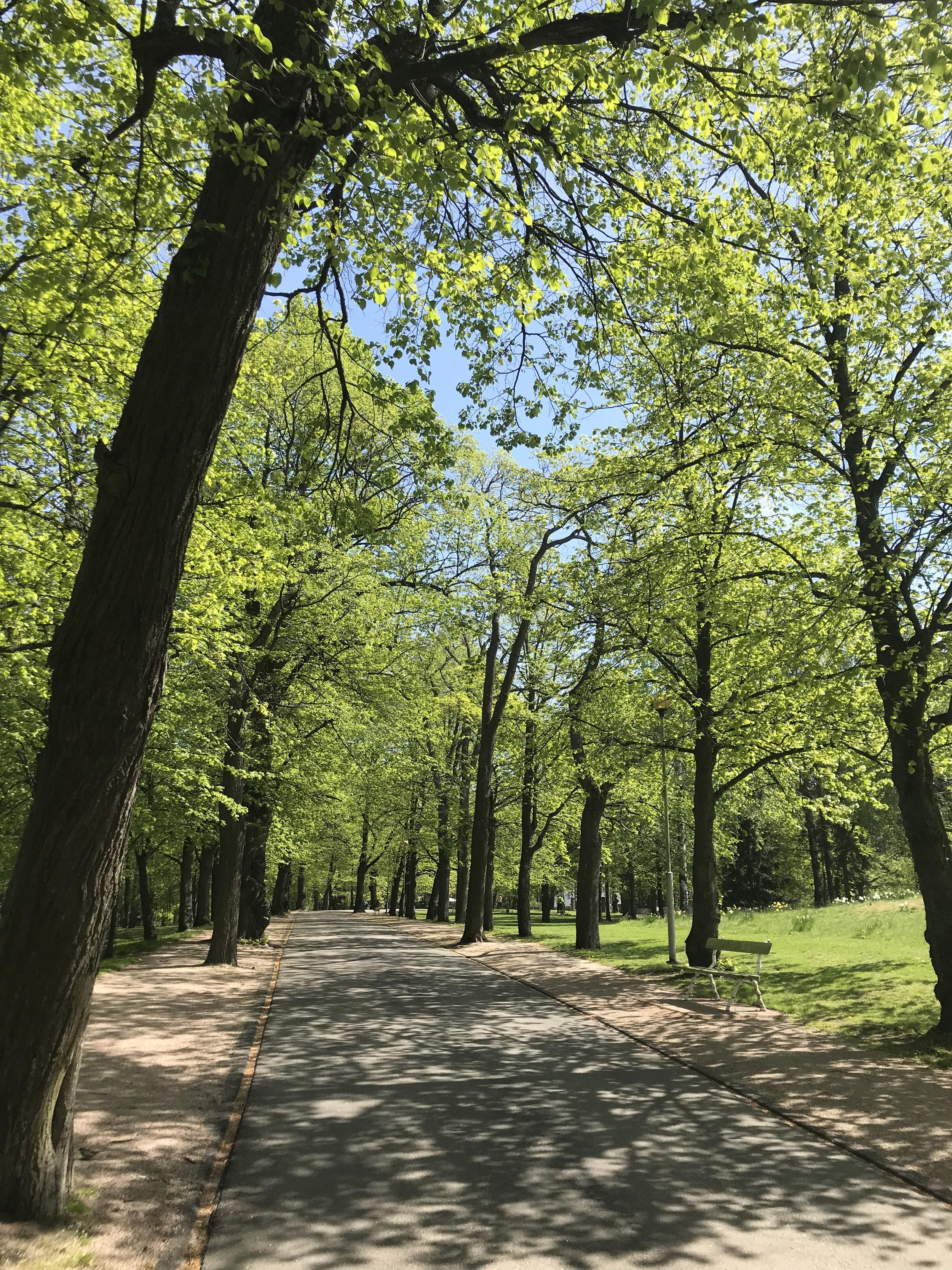 Lapinlahden puut tullessa 2.jpg