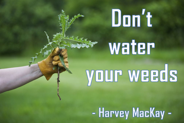 Harvey MacKay quote.PNG