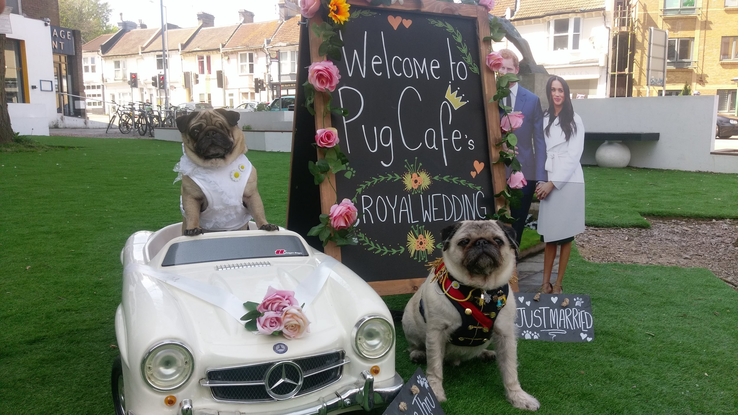 Poppy and Alfie  @alfiethehairypug  with their costumes designed by  @theverydistinguishedpugcompany