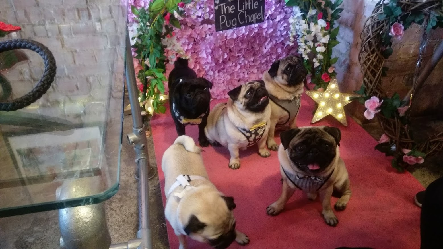 Pearl  @pugalier.sisters.and.pearl , Frank and Poppy  @frankandpoppypugs , Henry  @henrypercypug  and Lilly  @little_lil_pug